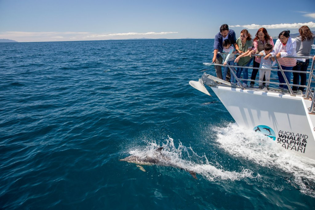 Auckland Whale and Dolphin Safari, North Island guided tours New Zealand