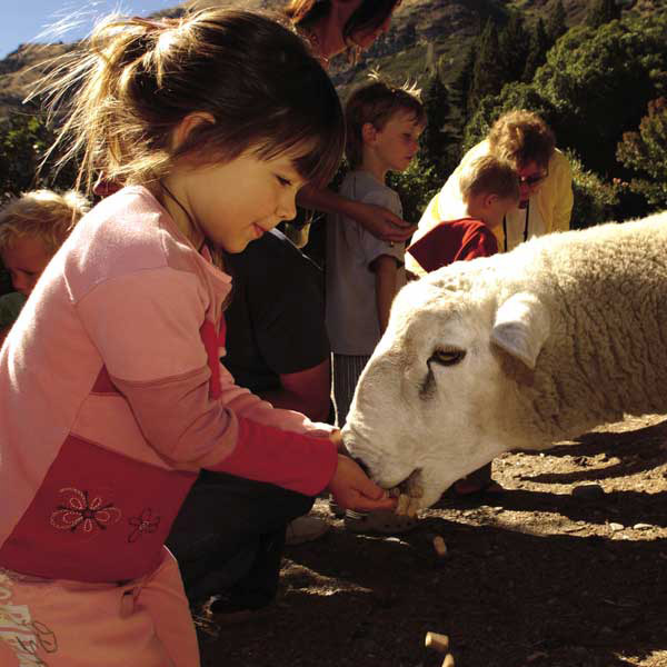 7 Day South Island <br> Family Guided Tour