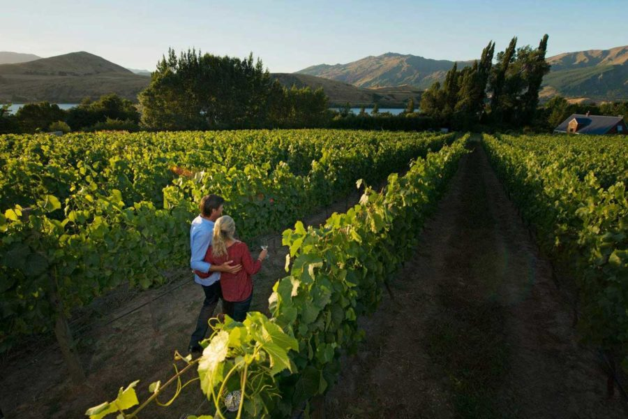 appellation wine luxury small group tours new zealand