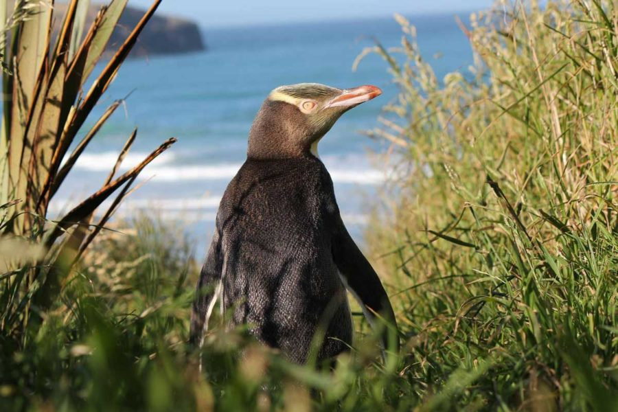 new zealand wildlife private tours nz