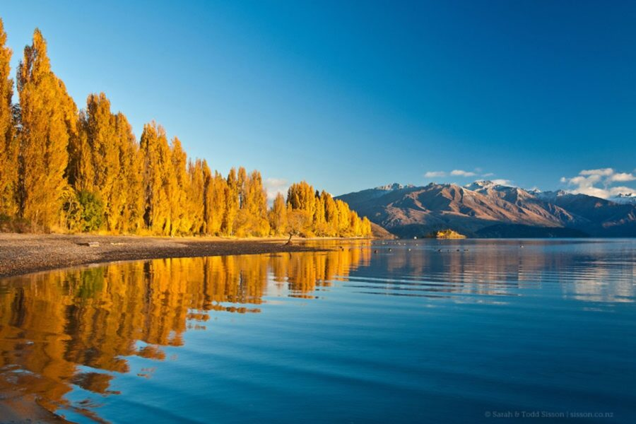 fall colors in Wanaka--the best time to travel to New Zealand for autumn scenery